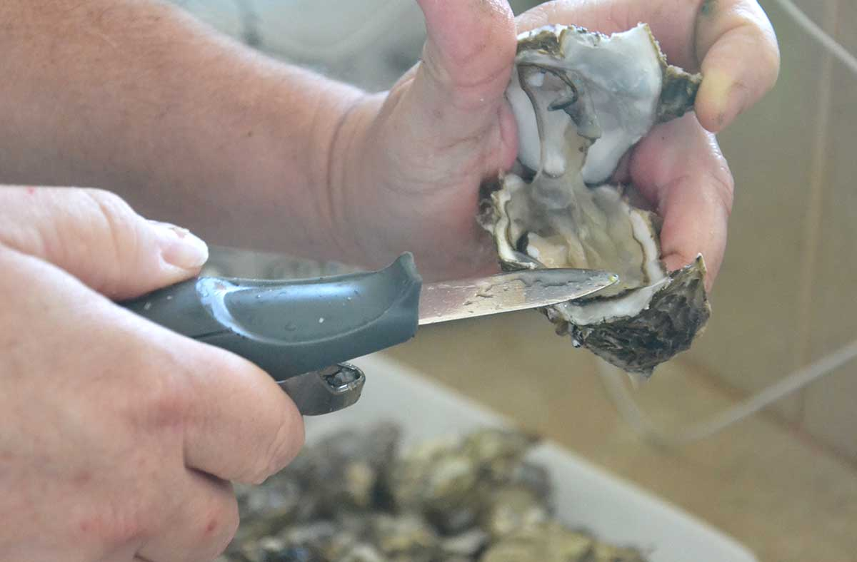 oyster opened.